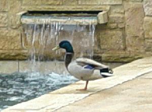 I'm Quacking Up 2.jpg