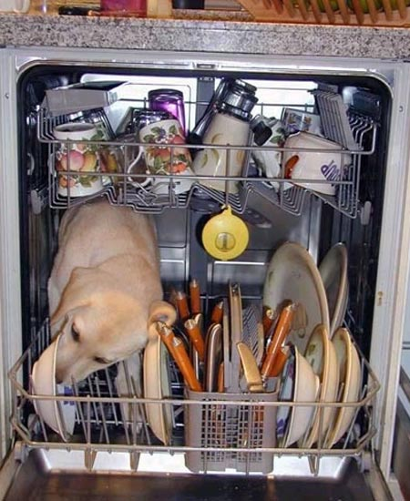 Dog Dishwasher-450.jpg