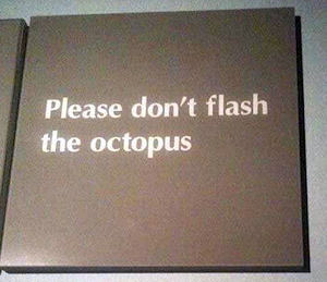 Don't Flash the Octopus-300.jpg