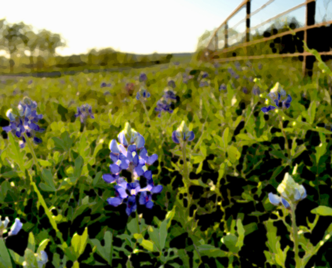 Ranch Bluebonnets - Up Close - Art-650.jpg