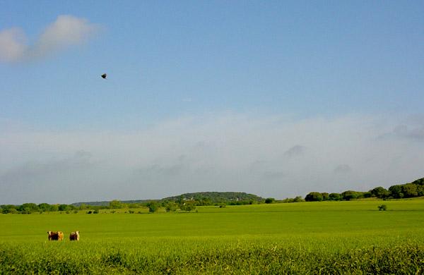 Gap Landscape-600.jpg