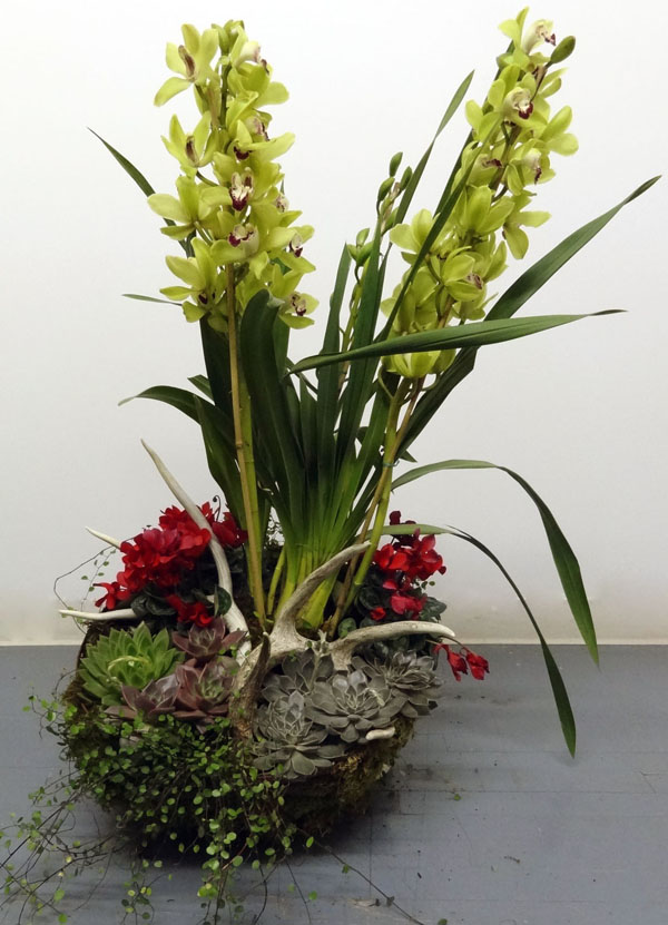Planter with Orchid and Deer Antler 600.jpg