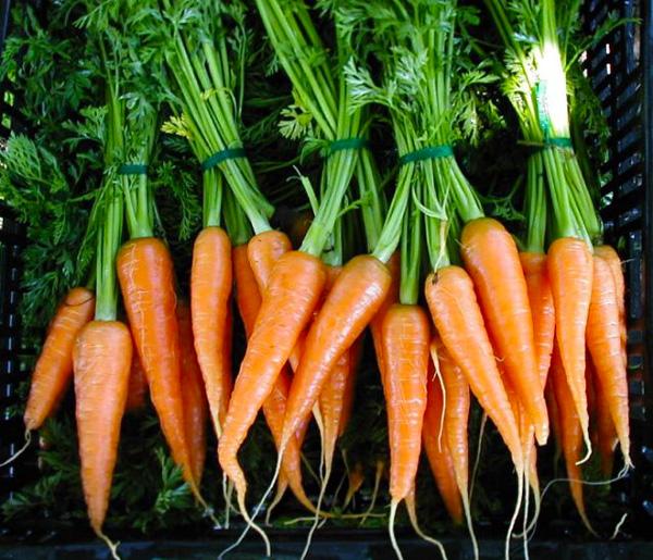 Carrots-600.jpg