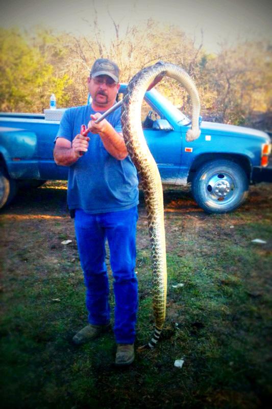 Snake-533.jpg