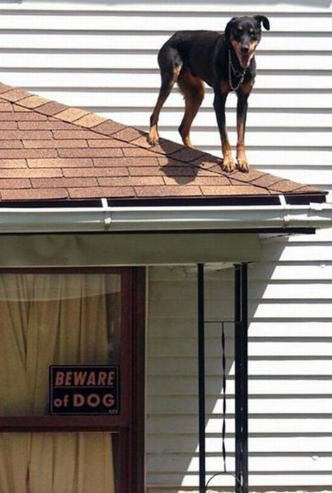 11-24 - Beware of Dog-472.jpg