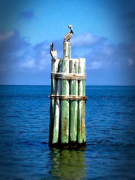 Pelican-450.jpg